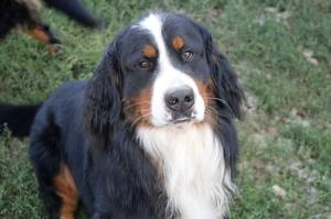 Benny (11)